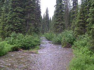 Stillwater_river_habitat